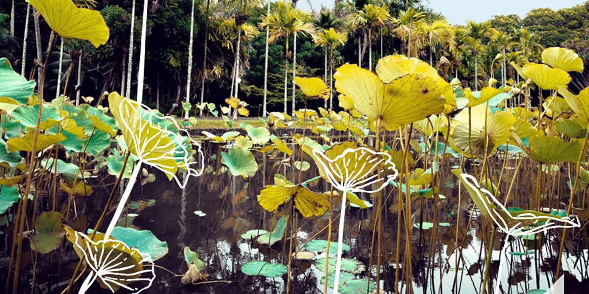 Le Jardin de Pamplemousses
